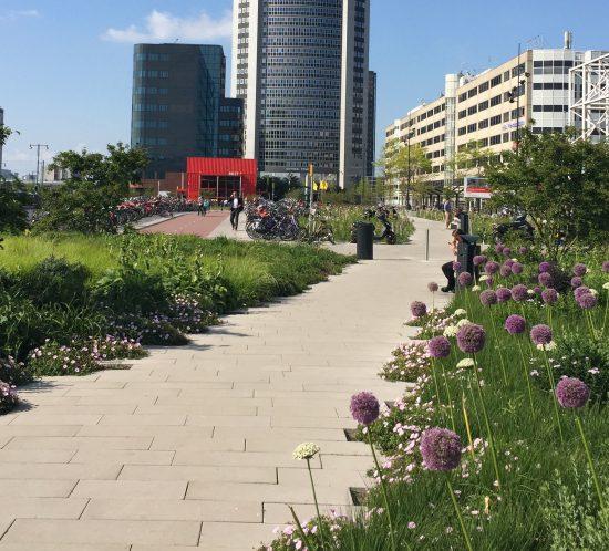 Gouden Zwaluw 2016 Orlyplein